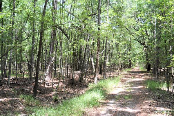 Wannamaker North Trail